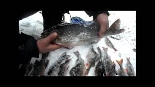 Первый трофейчик 2018 first trophy / рыбалка в Карелии