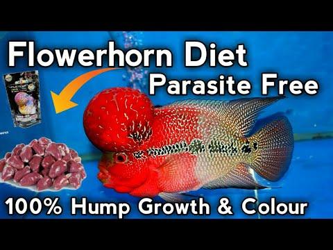 Flowerhorn fish complete diet || Best foods for flowerhorn fish 100% hump/  kok growth of flowerhorn