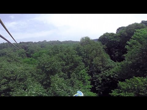 The Longest Zip Line at Tree Frog Canopy Tour