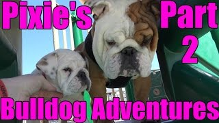 Pixies Bulldog Adventures Part 2 - Park Play