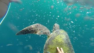 Operation Milagro II: Vlog 01 - Turtle Rescue