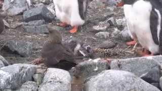 baby rockhopper videos - 320×180