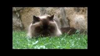 nevetéskezelés macskáknál)