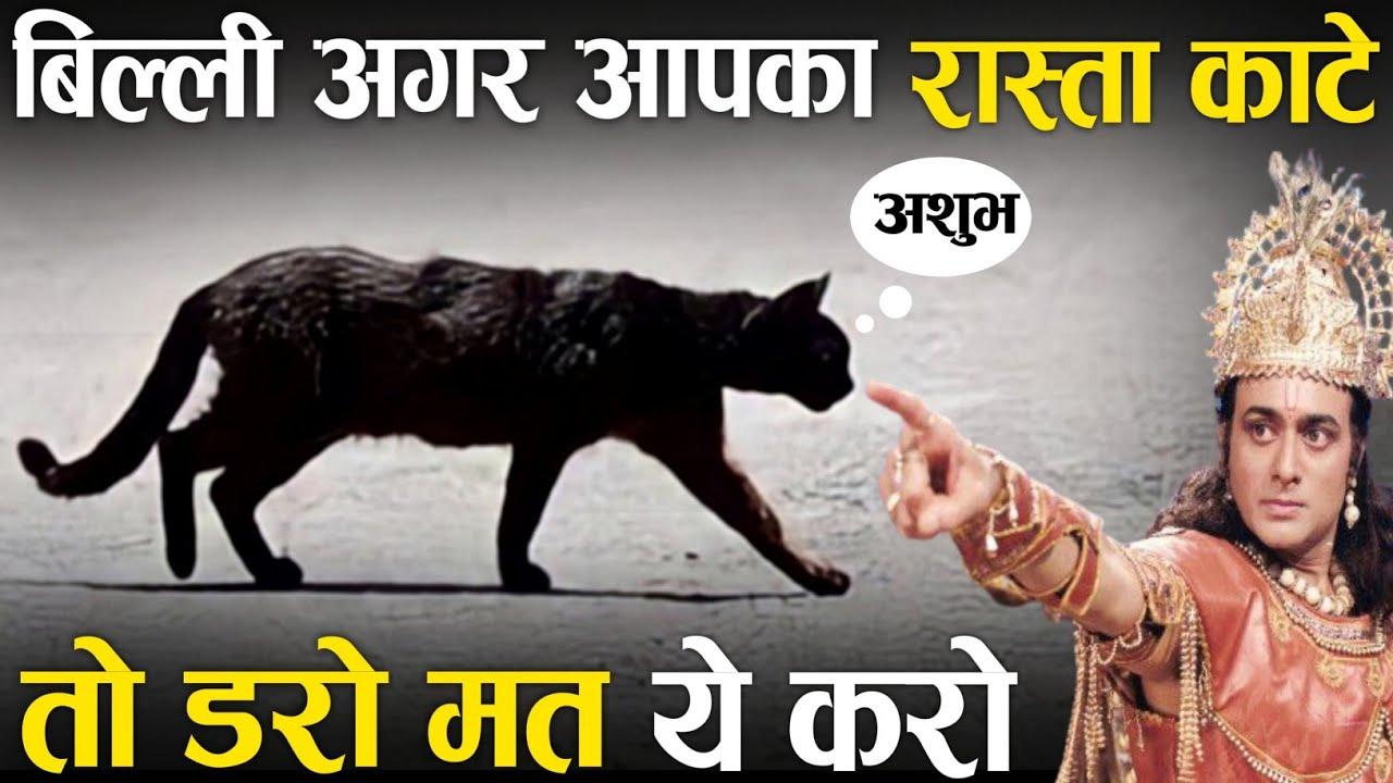 बिल्ली आपका रास्ता काटे तो ये करो डरो मत    कृष्ण उपदेश    भगवत गीता    Vijay mehra1k