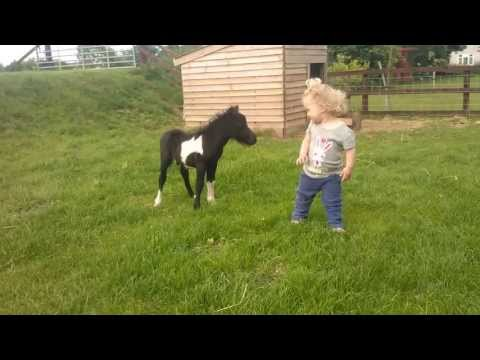 newborn miniature shetland foal gets friendly with young children!