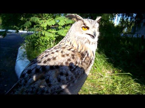 Хищные птицы красной книги Р.Ф  Посещение заповедника Галичья гора.