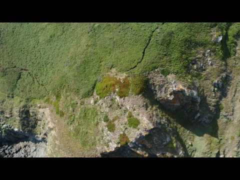 Guernsey Biodiversity Partnership cliff survey near MP4 and MHwh