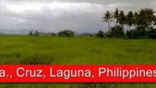 RIce Land For Sale