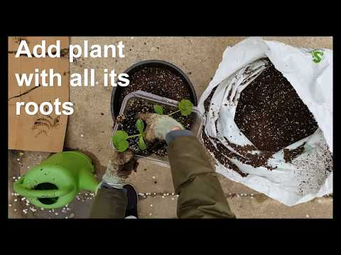 How to Transplant Veggies from Containers to Pots!