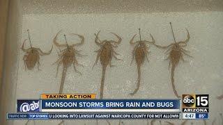 Monsoon storms bring rain and bugs