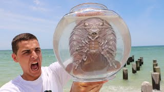 BEACH INVADERS CAUGHT IN FISHTRAP(IT BIT ME)