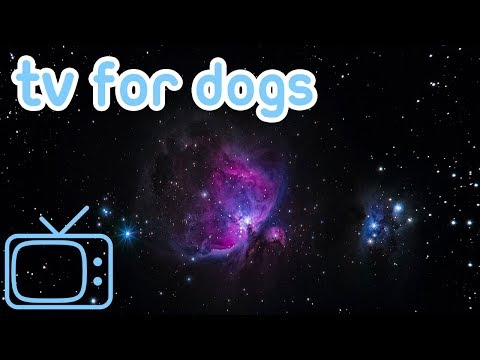 TV and Videos for Your Dog to Watch! Abstract, Space and Nature Footage for Dogs!