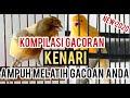 Pasti Gacor Kompilasi Masteran Kenari Ngeroll Panjang Asli Jernih New   Mp3 - Mp4 Download