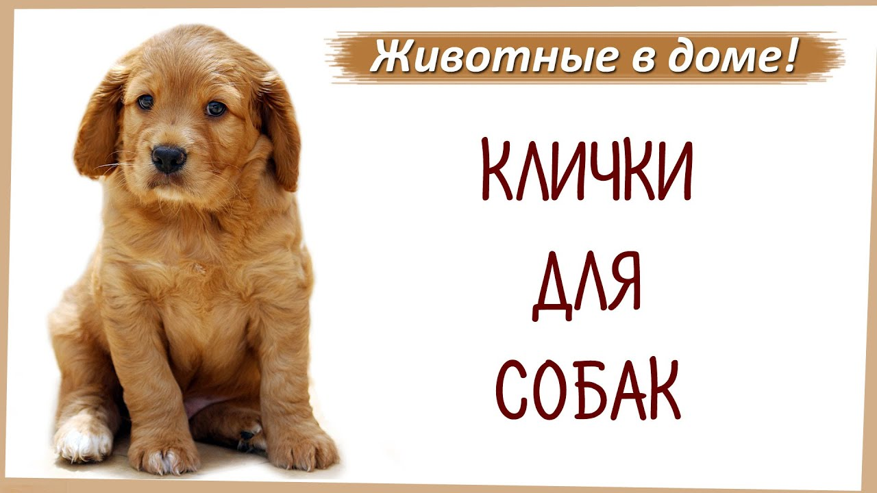 Клички, имена для собак. - YouTube