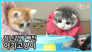 아기고양이 크리스마스 장난감 추천 /  다이소 빙글빙글…