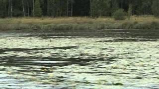 озеро Зюраткуль(Озеро Зюраткуль - входит в состав одноименного национального парка. Расположено на юге Саткинского района..., 2011-09-01T08:34:42.000Z)