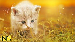 10시간 잔잔한 수면음악  스트레스 해소음악, 잠잘때 듣는 음악, 불면증치료음악, 수면유도음악 ♬ 야옹이 아기 고양이 (Baby Cat Kitten Meow Meme)