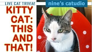 Live Cat Trivia at Nine's Catudio Why Do Cats Have 9 Lives?