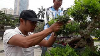 Gambar cover Master talk about  informations  this great Bonsai tree.(part 1)