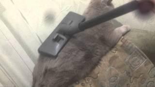 видео Мой кот не когда не линяет
