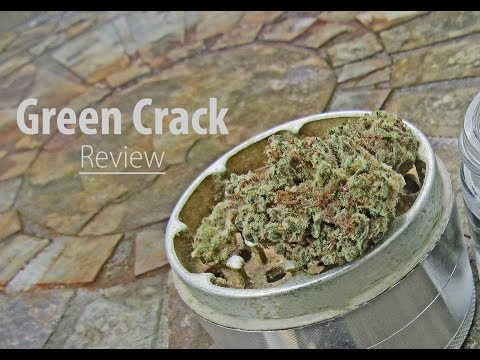 Green Crack - Weed Strain Review