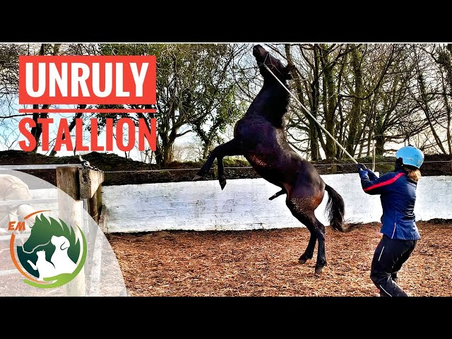 A New STALLION and 2 little COLTS - I think I have my HANDS FULL!  UPDATE VIDEO