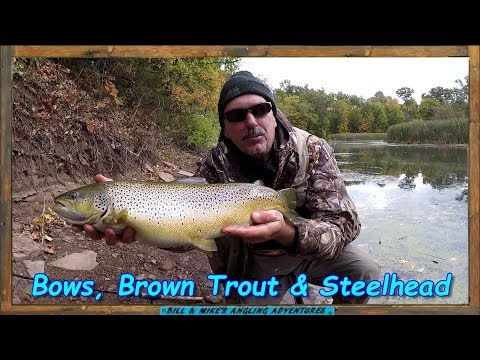 October Bows , Brown Trout & Steelhead -  Ontario Tributary