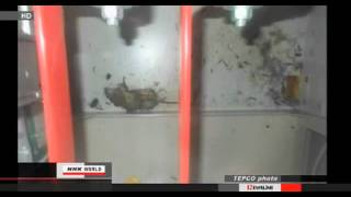 """Fukushima Power Outage """"Rat to Blame"""" update 3/20/13"""