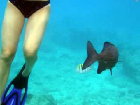 Lou's Reef Photos --- Grand Cayman