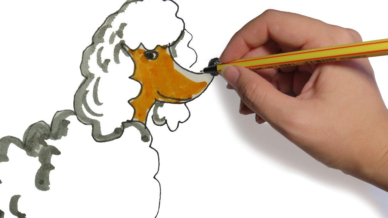 Como Dibujar Un Perro Caniche Paso A Paso Youtube