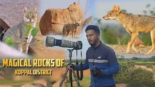 Amazing Sighting | Jungle Cat | Bengal Fox | Golden Jackal | Wildlife Photography | Kannada