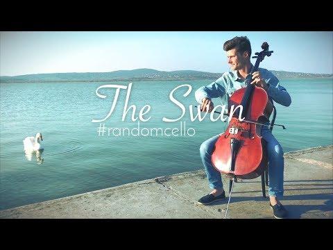The Swan - #randomcello