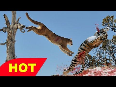 Animals Documentary  MALA MALA NIGHT   AFRICA WILD   Leopard, Lions And Hyenas