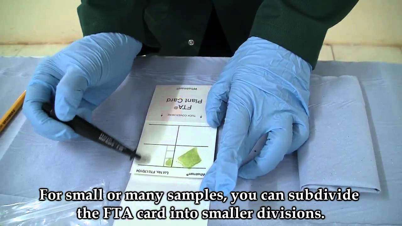 Dna storage long term paper fta