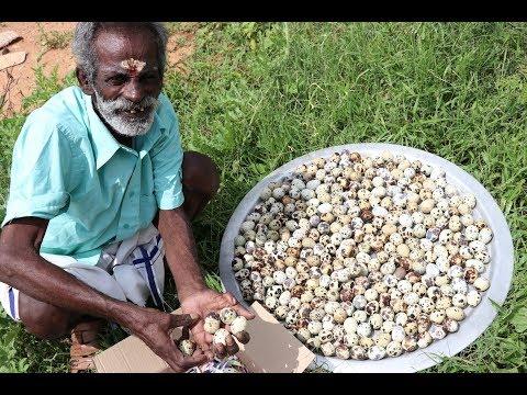 500 Quail eggs Prepared by my Daddy ARUMUGAM / Village food factory