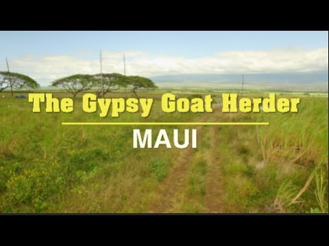 The Gypsy Goat Herder - Maui