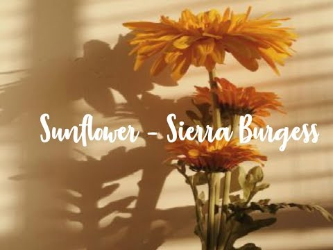 Sunflower [] Sierra Burgess [] 1 hour loop