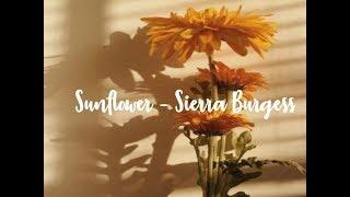 Sunflower [] Sierra Burgess [] 1 hour loop
