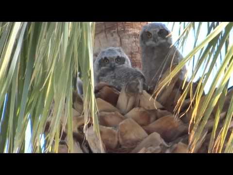 Apache Wells Owls