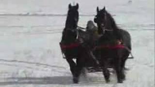 Friesian Horse Sleigh 2008