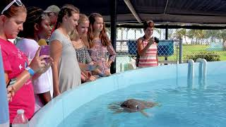 Only In The Keys  Marathon Turtle Hospital