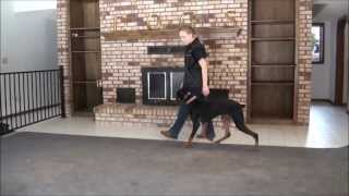Nova (doberman Pinscher) Boot Camp Training Video