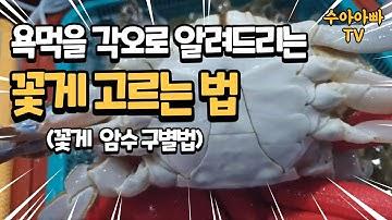 욕먹을 각오로 알려드리는 꽃게 고르는 법. 꽃게 수율 좋은놈 선별법. How do choose Blue Crab. [수아아빠TV]