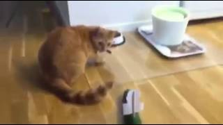 Cat reaction on seeing donald trump photo funny videos
