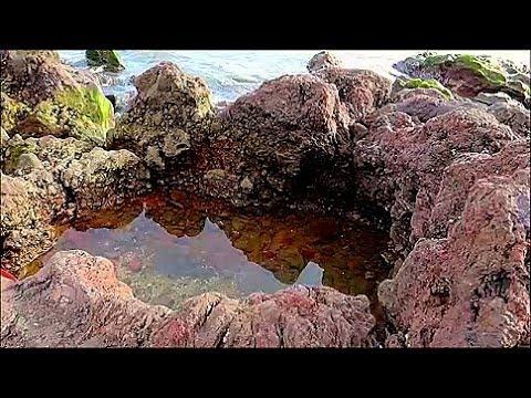 물빠진 바닷가 웅덩이 에서 본 이상한 물고기