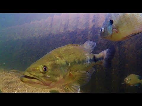 Fishing Ottertail County - Minnesota