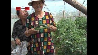 Китайцы переборщили с пестицидами...в 256 раз