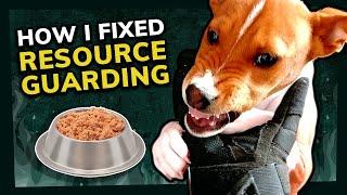 How I Fixed my Basenji's Food Aggression   Positive Dog Training Tips