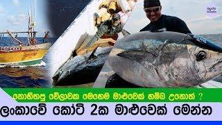 ලංකාවේ මීගමුවෙන් කෝටි 2ක් වටිනා මාළුවෙක් හම්බෙලා - Sri lanka Bluefin Tuna