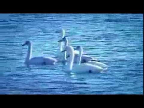 Tchaikovsky  Ballet Swan  Lake
